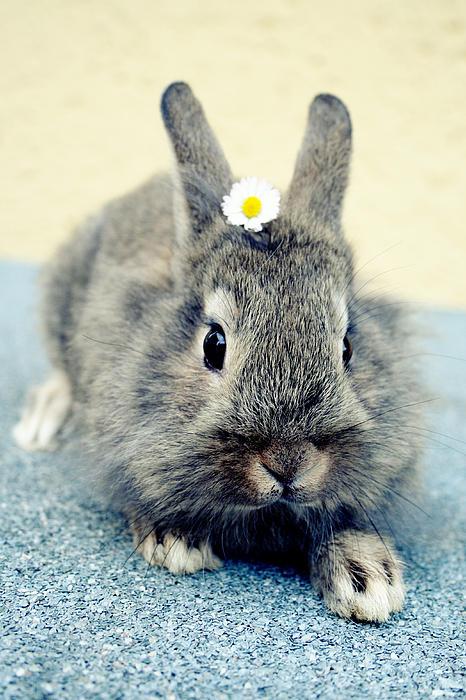 Falko Follert - Bunny