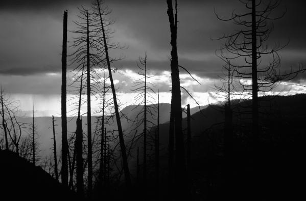 Burnt Forest - Yosemite Print by Charmian Vistaunet