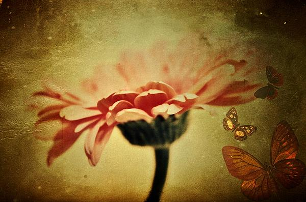Butterflies Print by Cathie Tyler