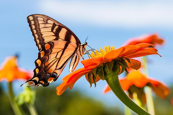 Alhaji Samura - Butterfly -2