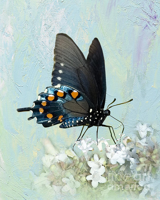 Butterfly Candy Print by Betty LaRue
