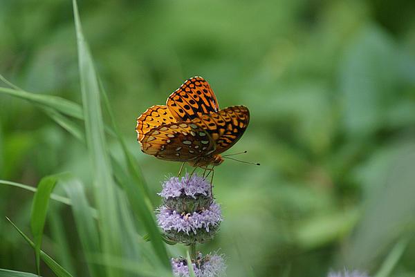 Rick Friedle - Butterfly Delight
