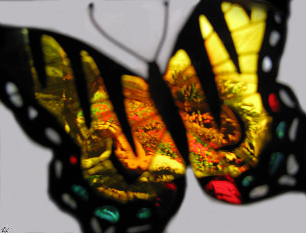 Butterfly Floral Collection  Print by Debra     Vatalaro