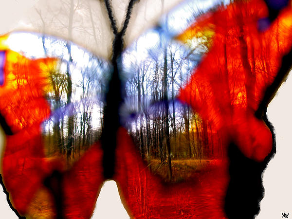 Butterfly Forest  C Photograph  - Butterfly Forest  C Fine Art Print