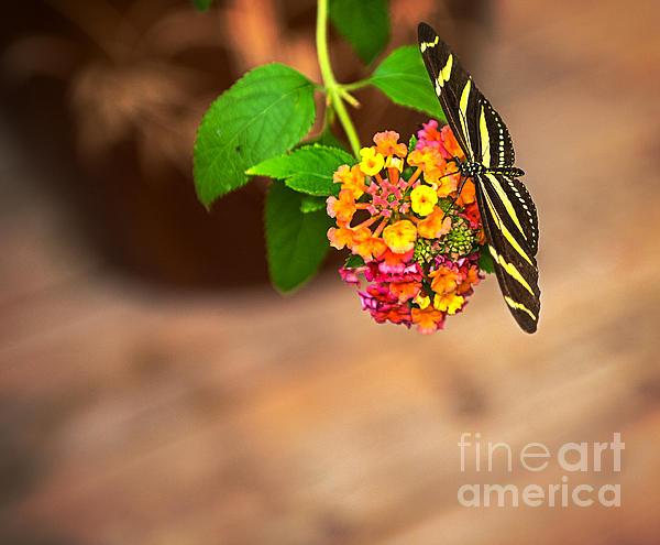 Jim  Hatch - Butterfly
