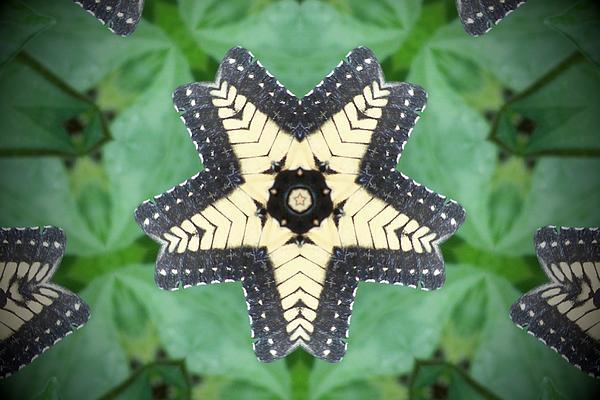 Leilani Worrell - Butterfly Kaleidoscope