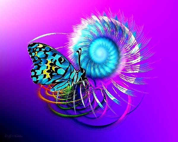 Gabriele Nedilka - Butterfly Magic