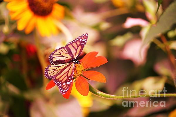 Butterfly On Flower 2 Print by Artie Wallace