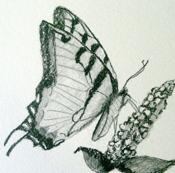 Marita McVeigh - Butterfly-Pencil