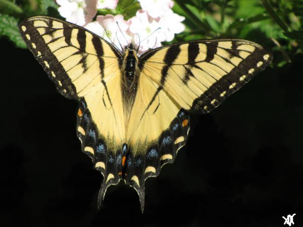 Butterfly Points Print by Debra     Vatalaro