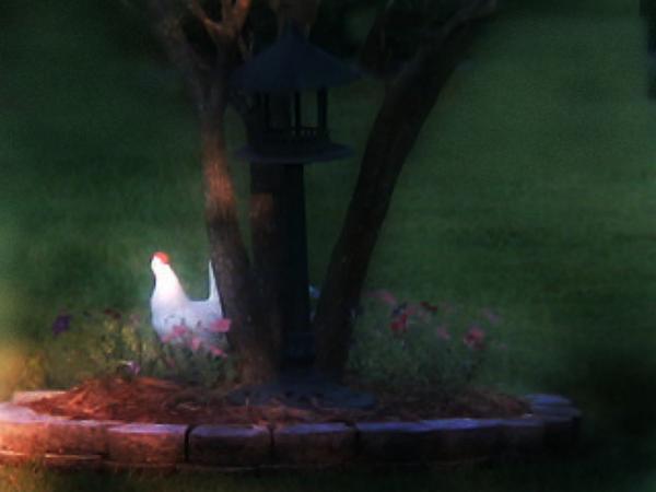 Sherry Gombert - Cackling Garden Hen