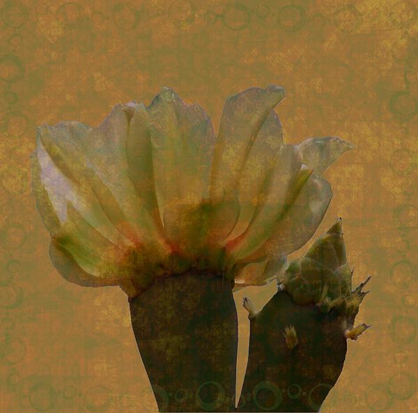 Rosalie Scanlon - Cactus Flower in Grunge