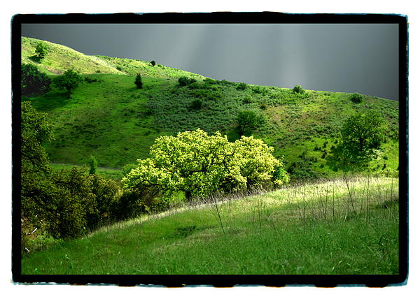 Calabasas Meadow After The Storm Print by Noah Brooks