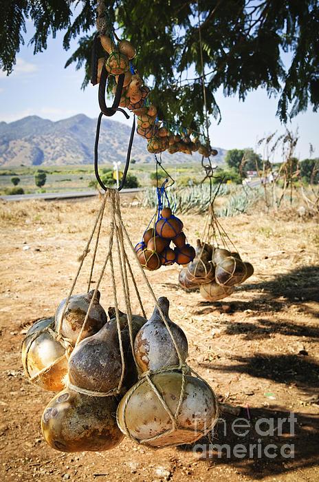 Calabash Gourd Bottles In Mexico Print by Elena Elisseeva