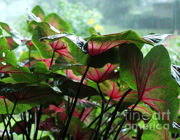 Caladiums In The Rain Print by Theresa Willingham
