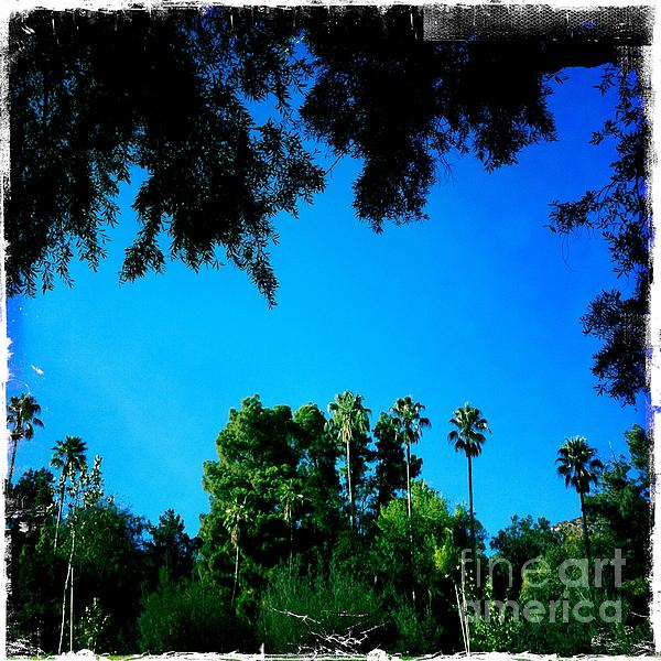 California Dreaming Print by Nina Prommer