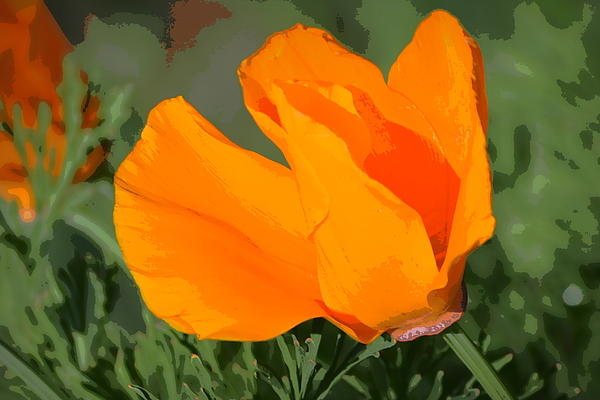Rima Biswas - California Poppy2