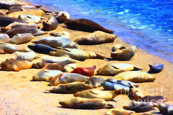 California Sunbathers . Harbor Seals Print by Wingsdomain Art and Photography