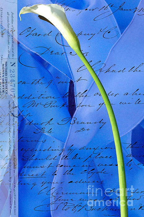 Calla Lilly On Blue Ribbon Love Letter Print by Anahi DeCanio