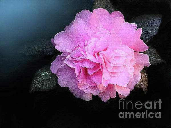 Camelia Print by Robert Foster