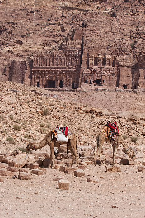 Camels In Front Of The Royal Tombs Petra Print by Martin Child