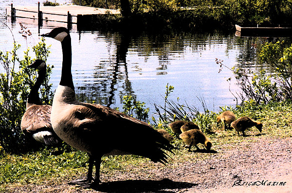 EricaMaxine  Price - Canadian Geese At Trojan Lake