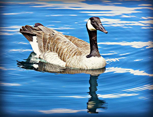 Foods That Canadian Geese Eat