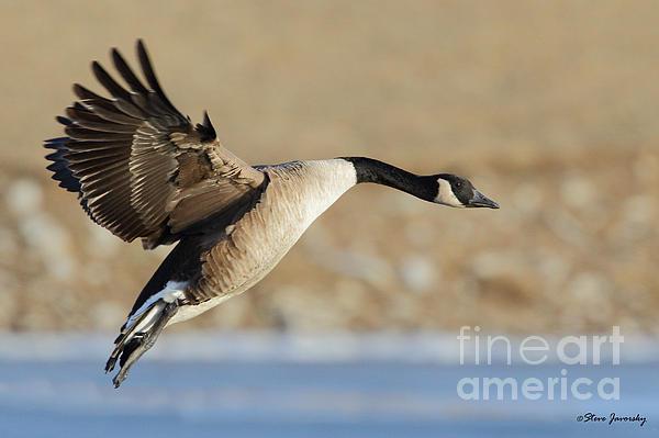 Canada Goose Sale Flights