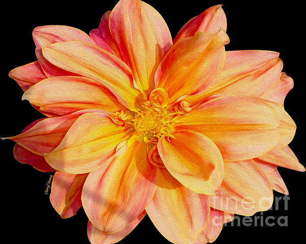 Cheryl Young - Candy Stripe Dahlia