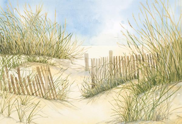 Cape Cod Dunes And Fence Print by Virginia McLaren