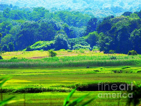 Cape Cod Marsh On A Hot Day Print by Annie Zeno