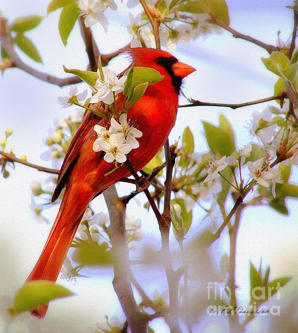Patricia L Davidson  - Cardinal In Springtime