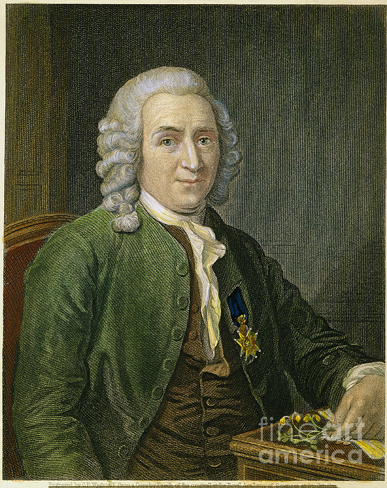 carolus linnaeus Founder of the binomial system of nomenclature and the hierarchical system of classification and a (perhaps the) leading botanist of his time.