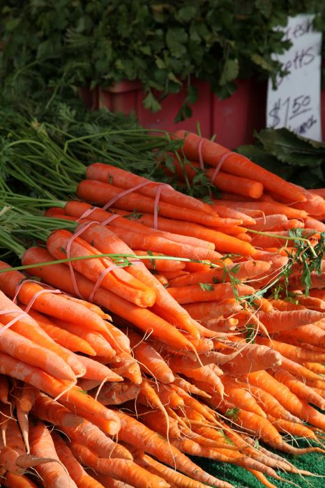 Carrot Bounty Photograph