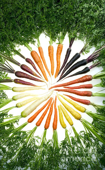 Carrot Pigmentation Variation Print by Science Source