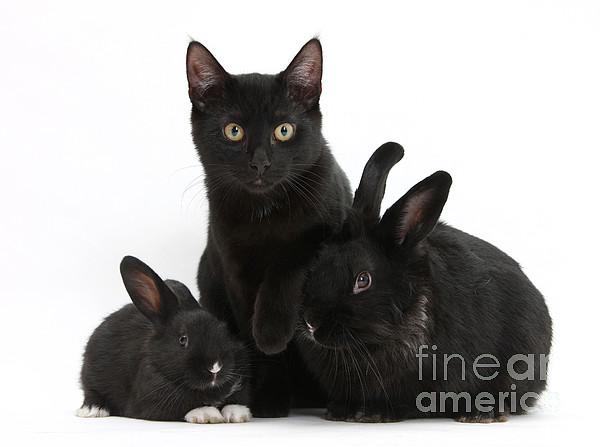 Cat And Rabbits Print by Mark Taylor