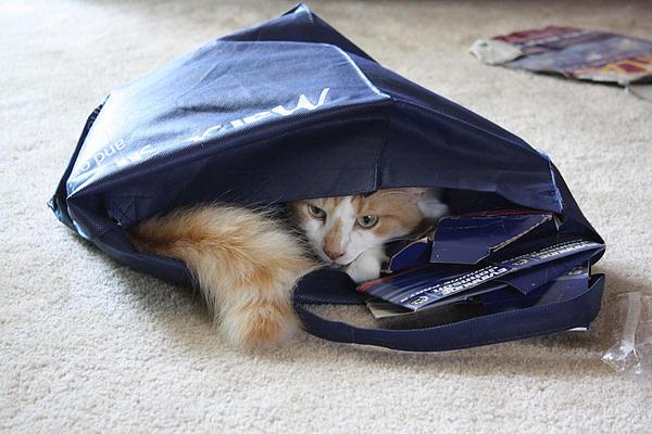 Rachel Hames - Cat in a Bag