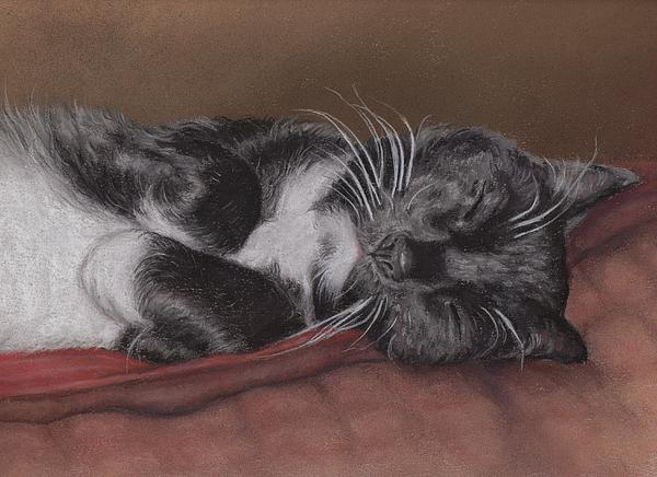 Pamela Humbargar - Cat Napping