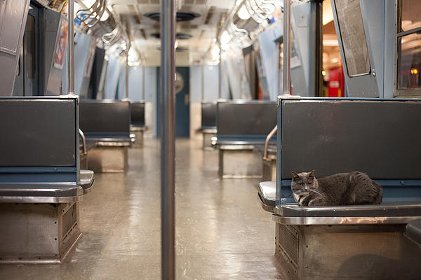 Lisa Futterman - Cat on the Subway