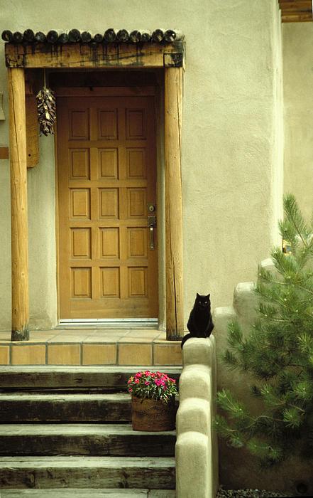 Brent Ander - Cat Post