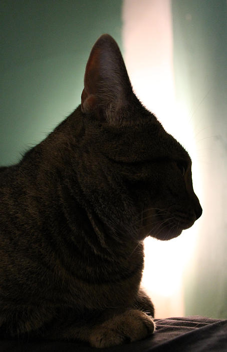 Cat Silhouette Print by Nina Mirhabibi