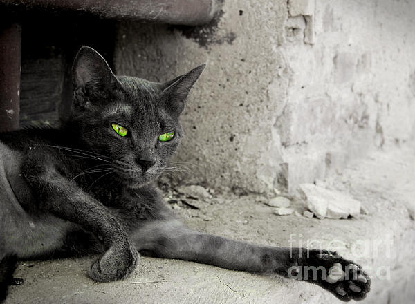 cat Print by Zuzanna Nasidlak