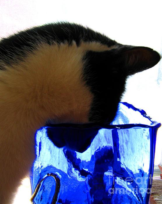 Cat's Curiosity Print by Leela Arnet