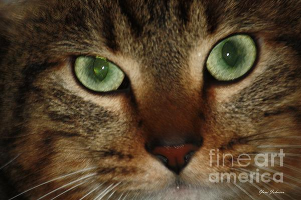 Cat's Eye Print by Yumi Johnson