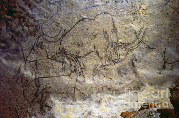 Cave Art - Mammoth And Ibexes Print by Granger