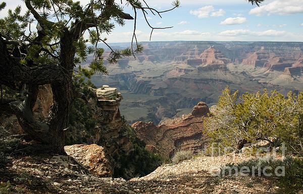Cedar Ridge Grand Canyon Print By Juan Romagosa