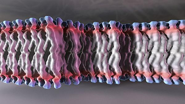 Cell Plasma Membrane Print by Phantatomix