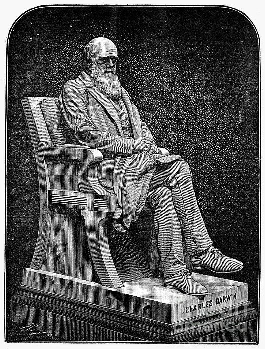 Charles Darwin (1809-1882) Print by Granger