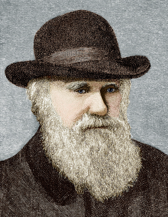 Charles Darwin, British Naturalist Print by Sheila Terry