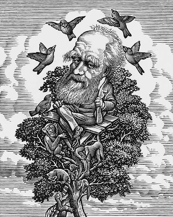 Charles Darwin In His Evolutionary Tree Print by Bill Sanderson